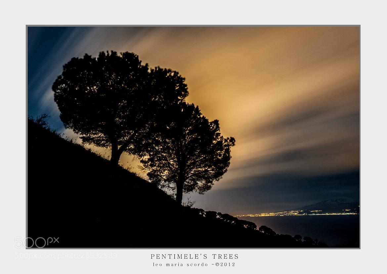 Photograph PENTIMELE'S TREES by Leo Maria Scordo on 500px