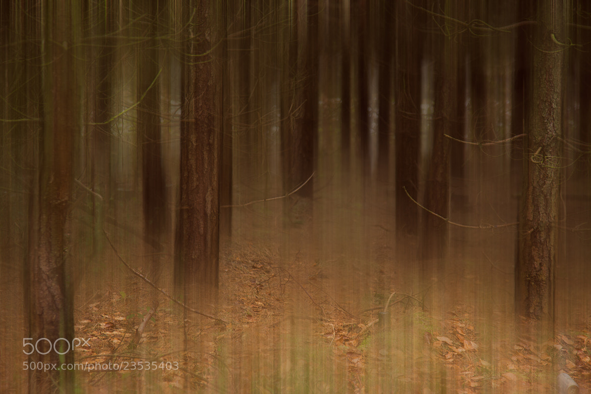 Photograph Forest Ghosts by Penny Myles on 500px