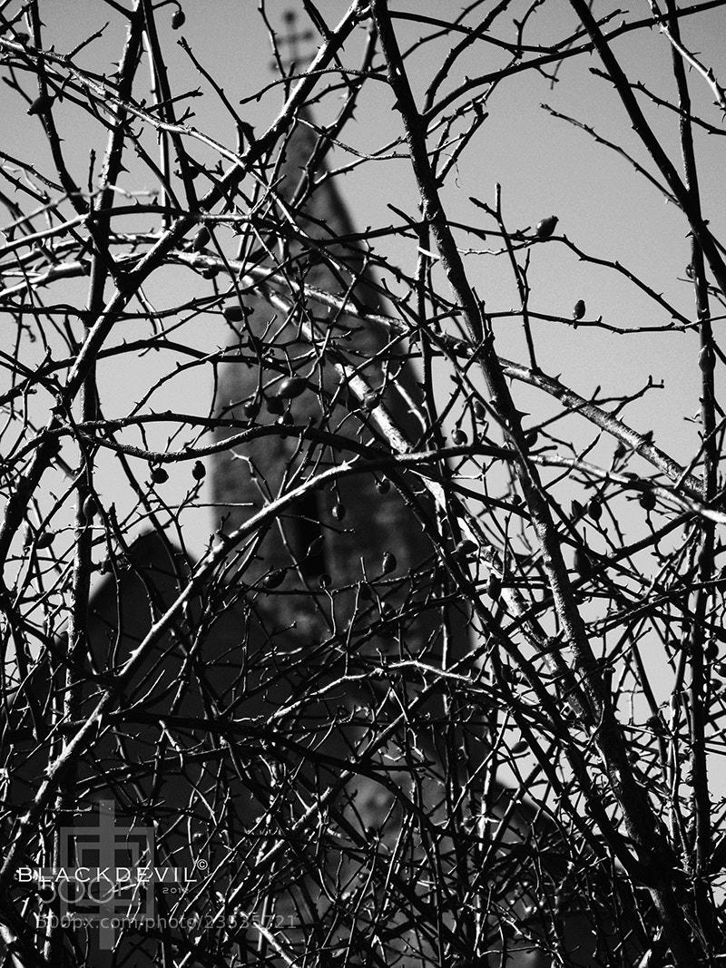 """Photograph The road by Tomáš """"BLACKDEVIL"""" Špánik on 500px"""