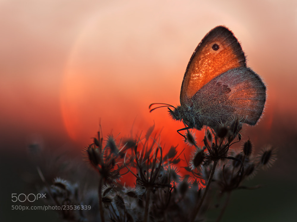 Photograph Twilight by Marcsi Kesjarne on 500px