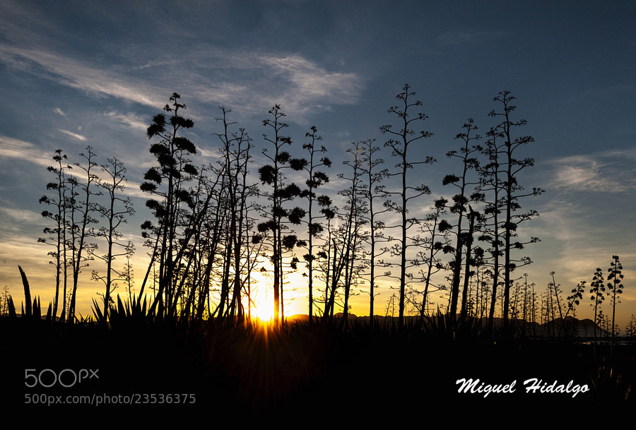 Photograph Pitas al alba by Miguel Hidalgo on 500px