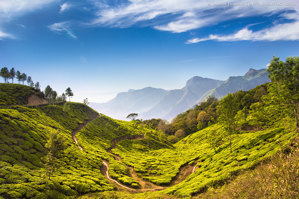 Photograph Munnar Tea Plantations by Anton Jankovoy on 500px