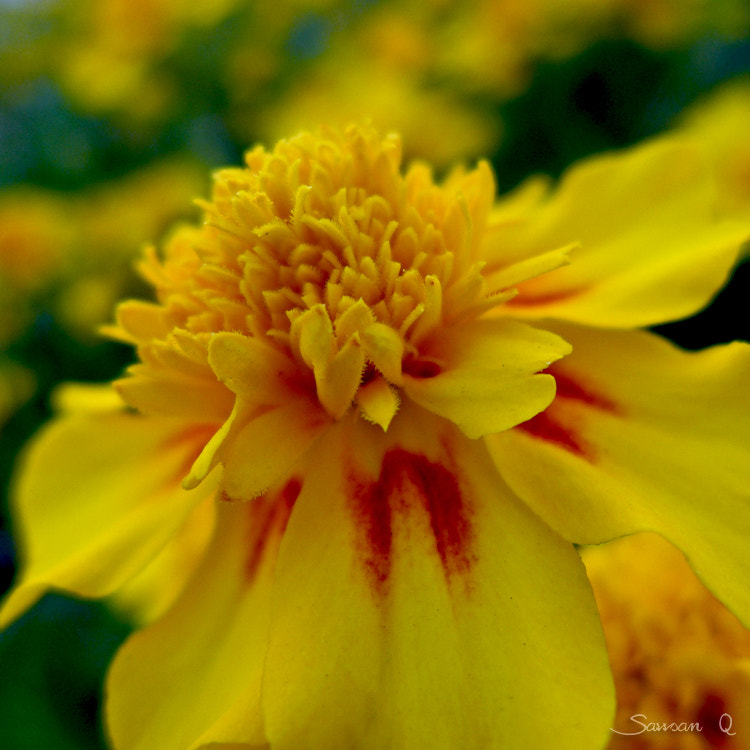 Photograph My name is Yellow .. by Sawsan Mohammed on 500px