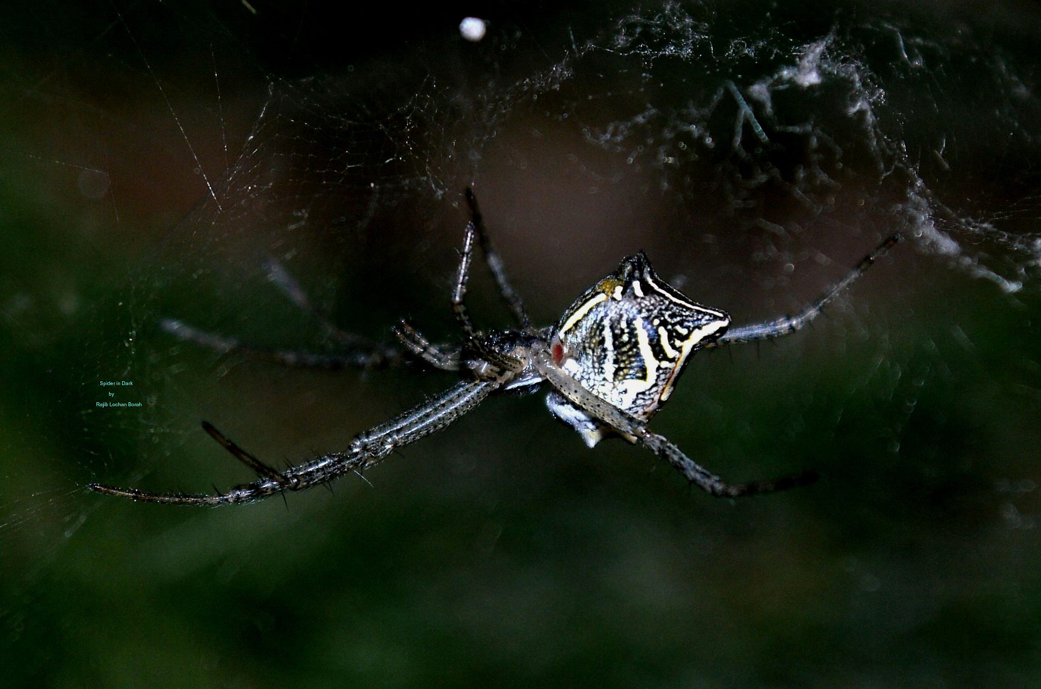 Photograph A spider in darkness by rajib borah on 500px
