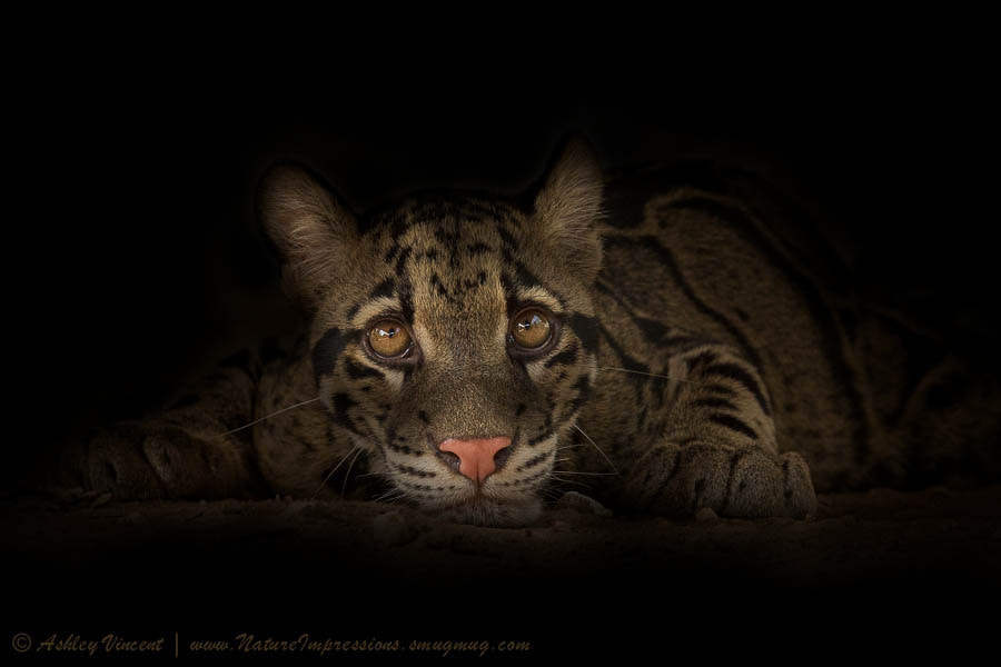 Photograph Soul Connection by Ashley Vincent on 500px