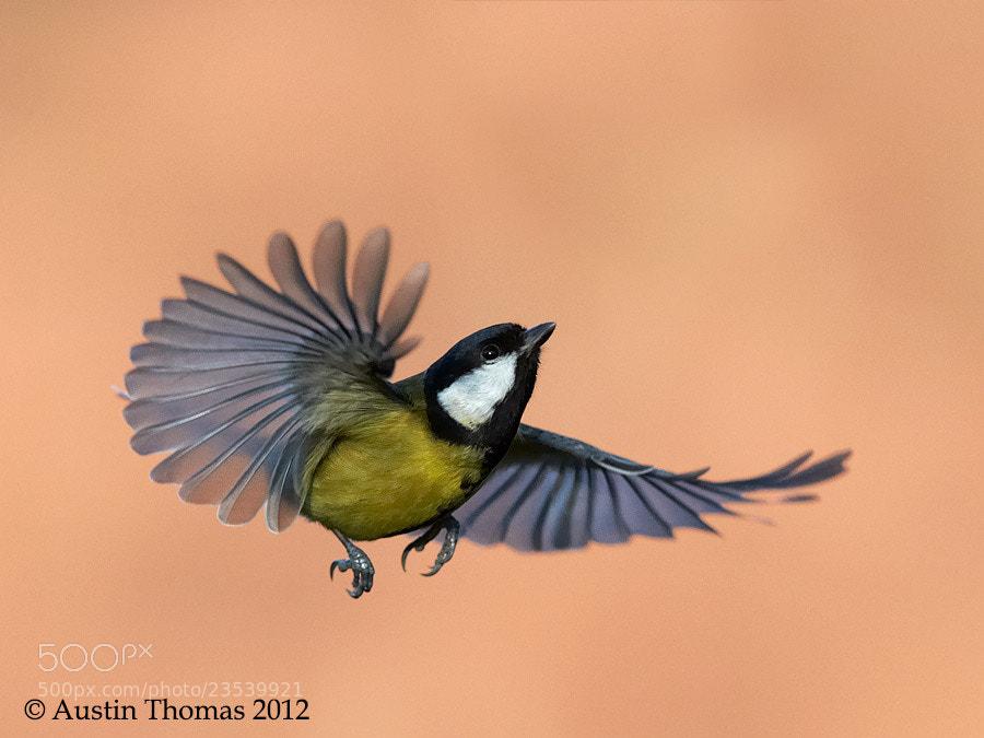 Photograph Upward thrust... by Austin Thomas on 500px