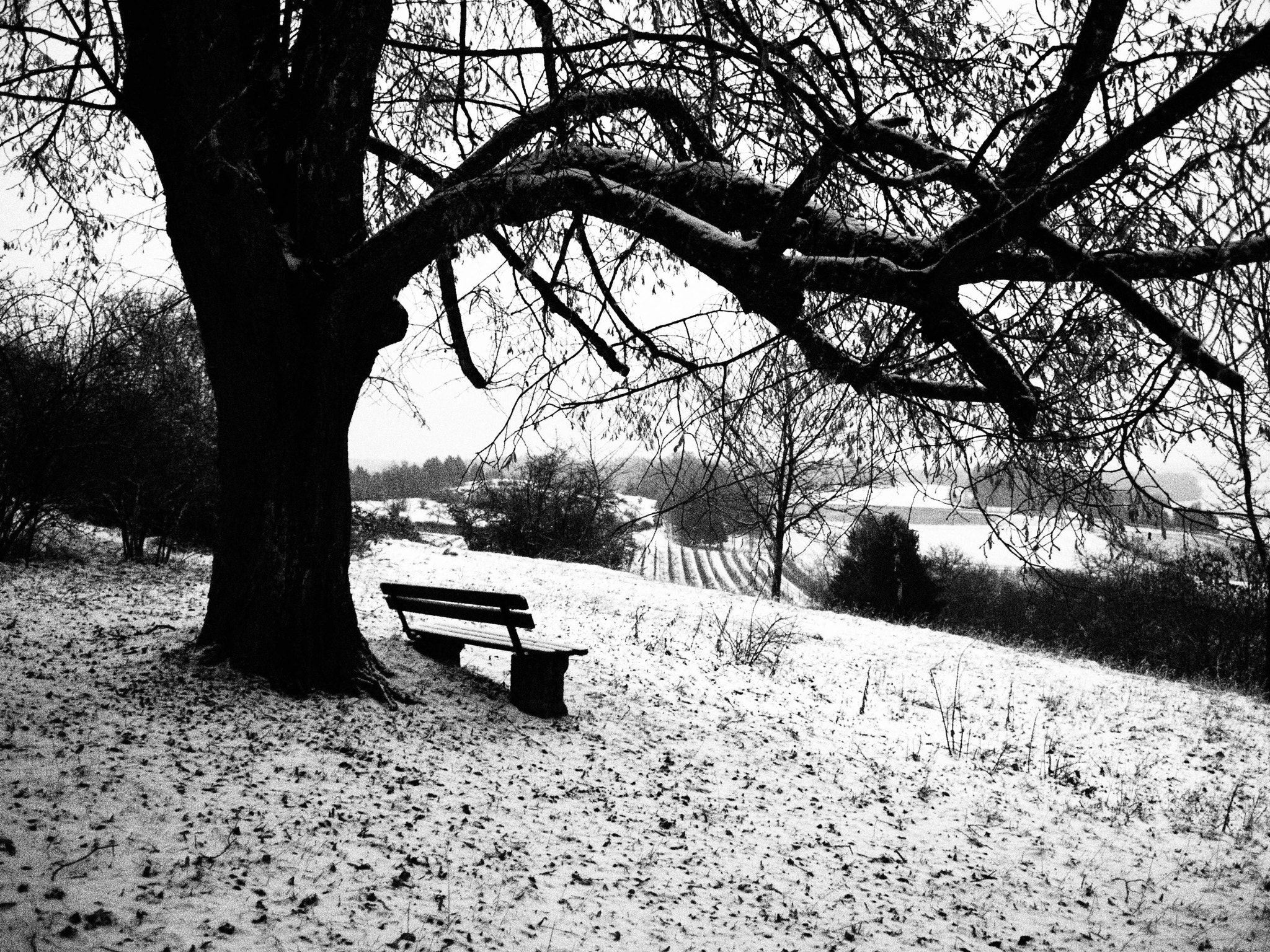 Photograph Countryside bench I by Oliver Weigel on 500px
