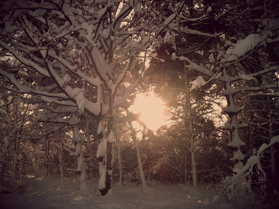 Photograph Snow by Annabel Grant on 500px