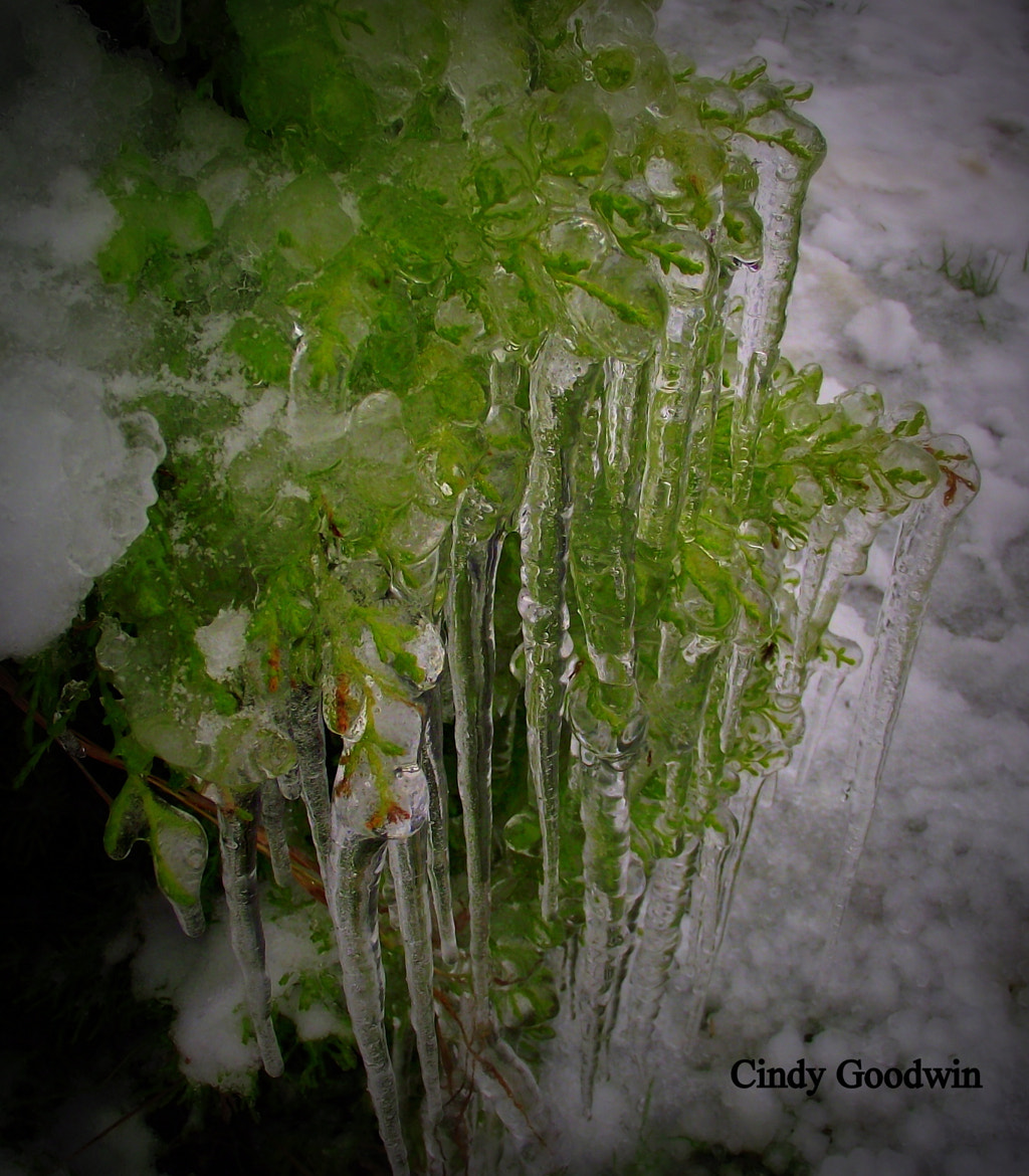 Photograph Icy  by Cindy Goodwin on 500px