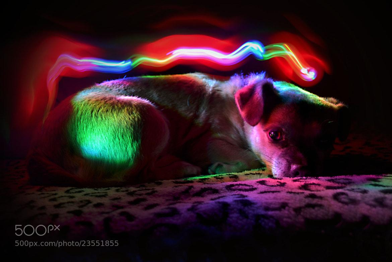 Photograph doglight by Lorena Lopez Ruiz on 500px