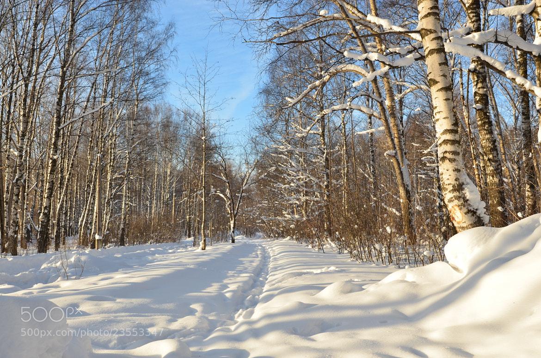 Photograph Winter path by Igor Zabara on 500px