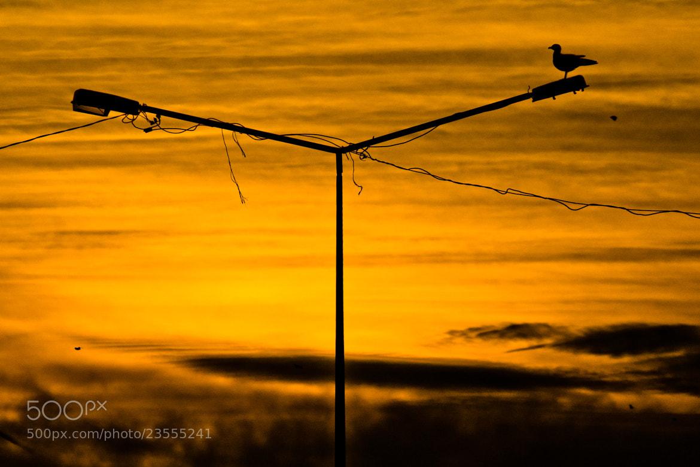 Photograph Loneliness by Cengiz Karacik on 500px