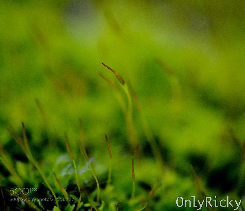 Photograph Moss the Simplicity by Ricardo Cardoso on 500px
