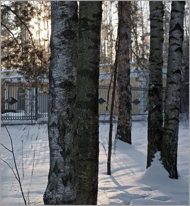 Photograph Берёзкам холодно by Zerg Uno on 500px