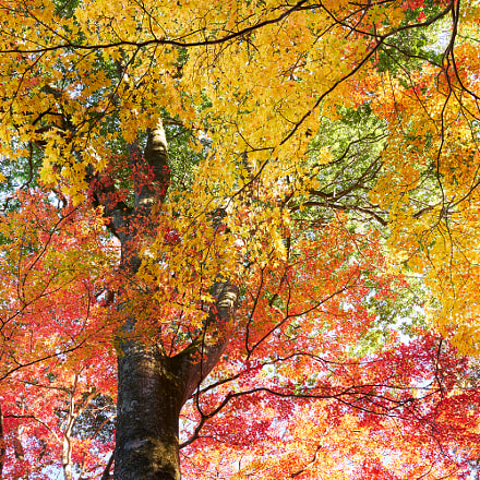 Shower of fall colors