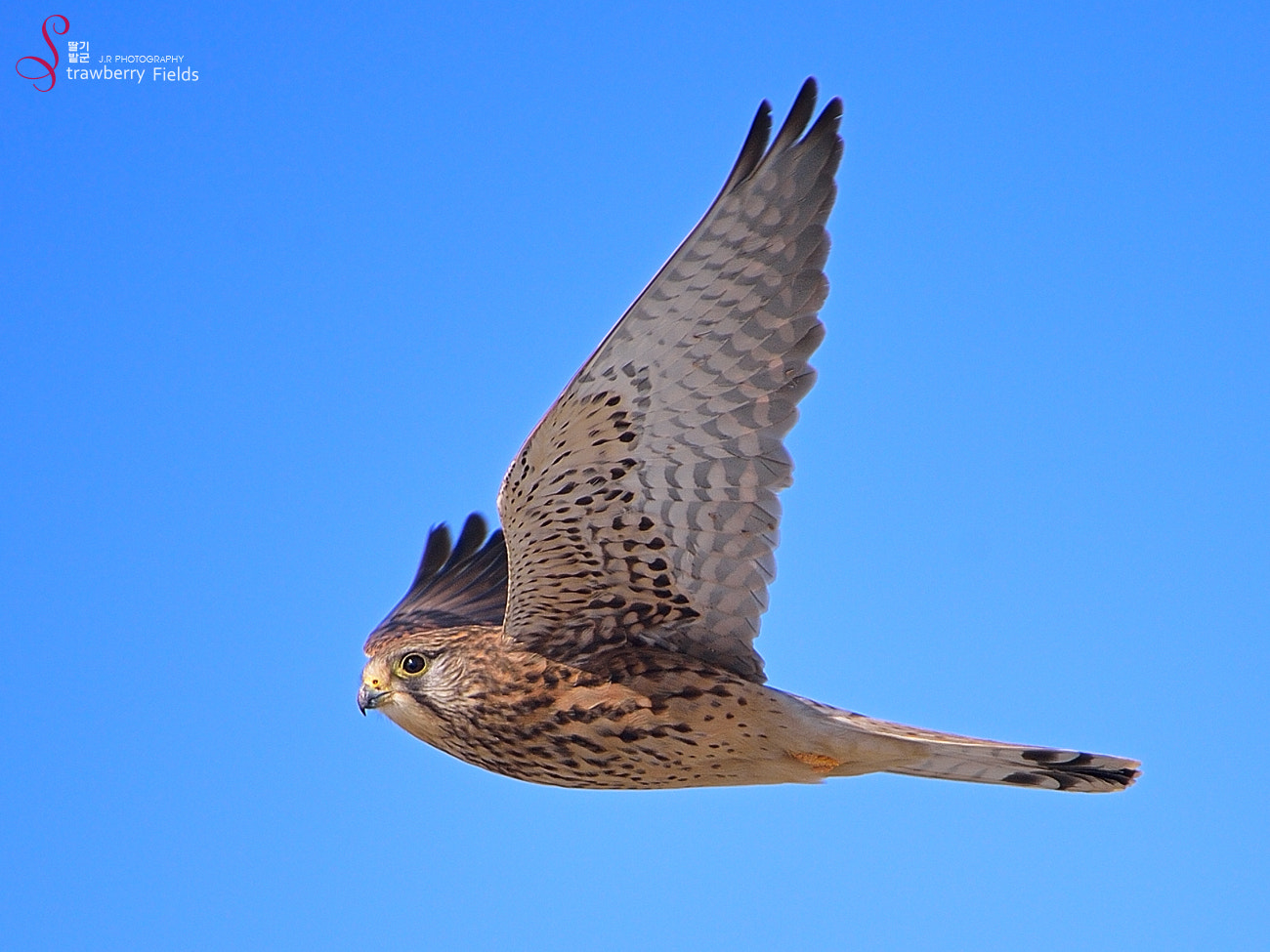 Photograph Kestrel by Jung-Rae Cho on 500px