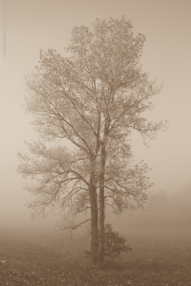 Photograph Tree in morning fog by Eje Gustafsson on 500px