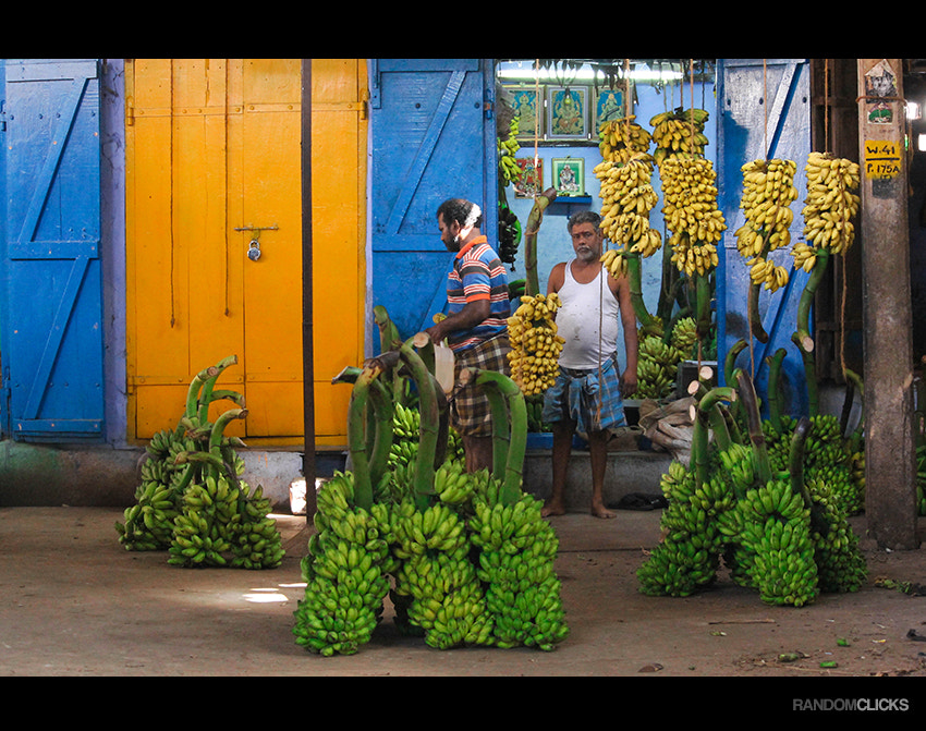 Photograph Its all about bananas by Syam (randomclicks.in)  on 500px