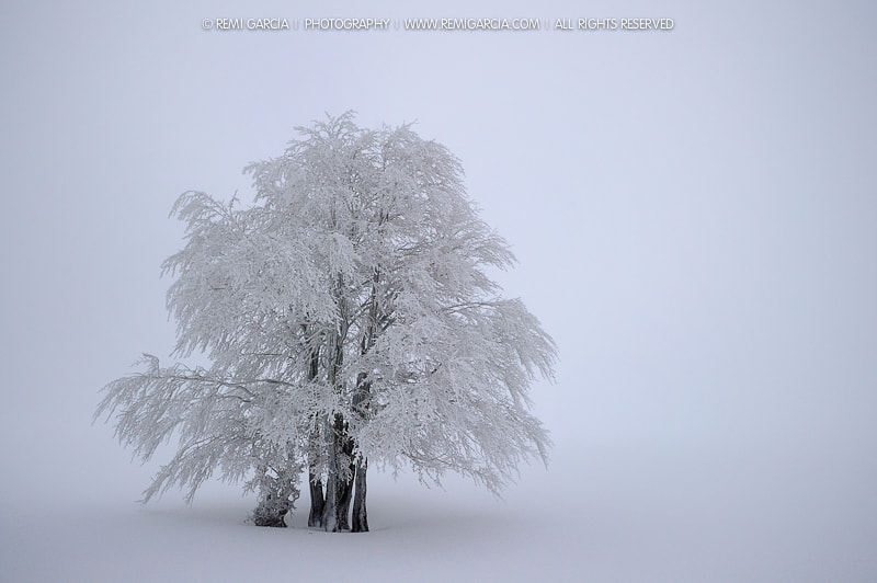 Photograph Lonely Tree by Rémi Garcia on 500px