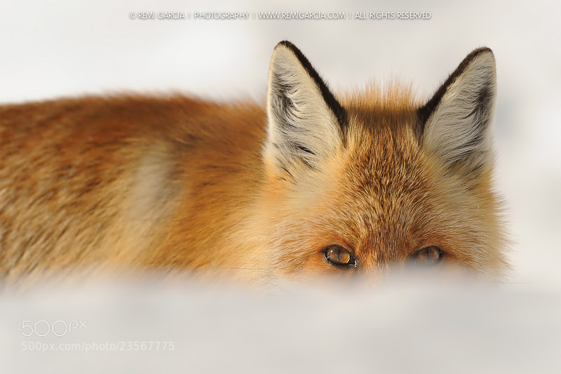 Photograph I See you by Rémi Garcia on 500px