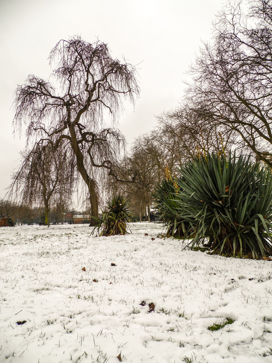 Photograph Snow in Stratford Park by Gessica Puglielli on 500px