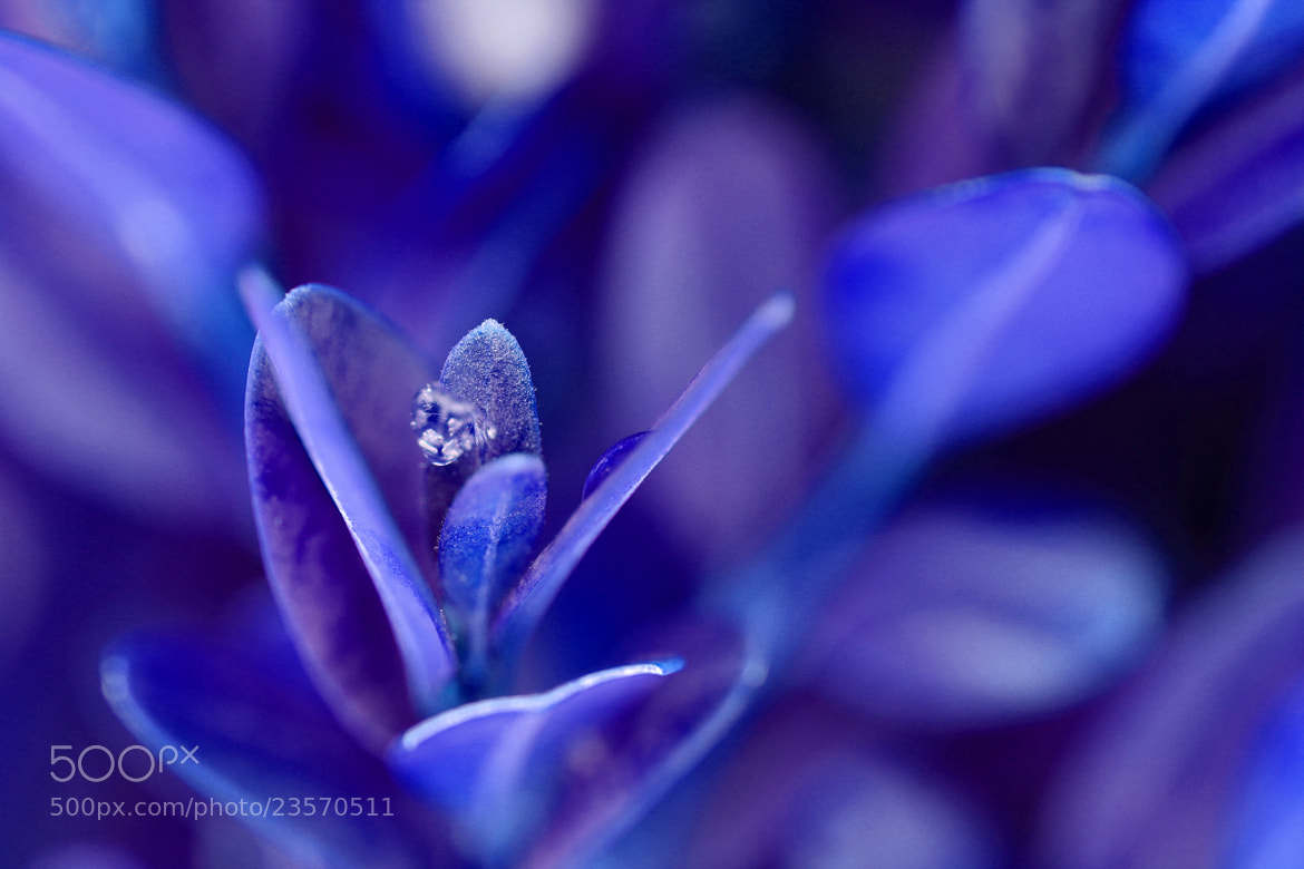 Photograph Blue Icy Flower by John Win on 500px