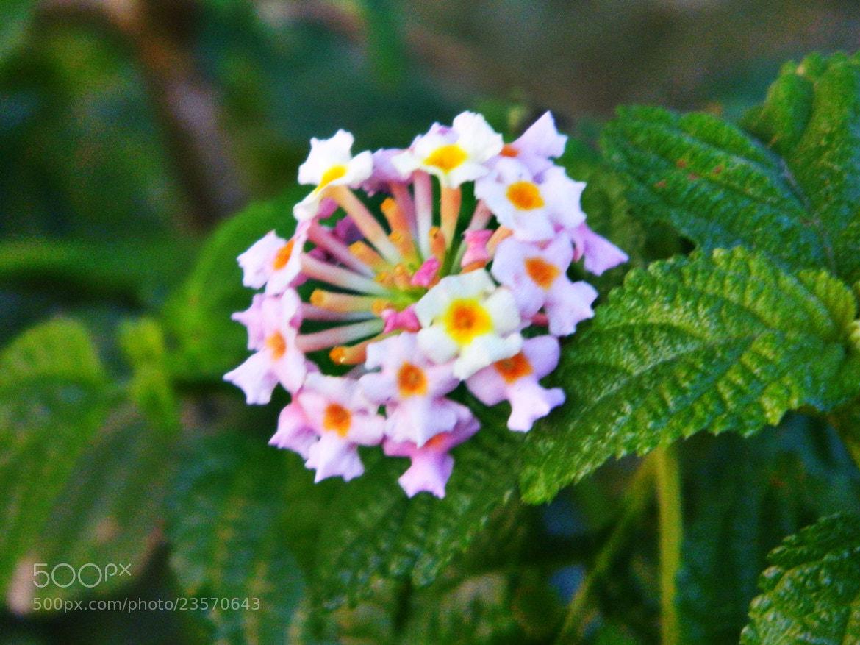 Photograph Flower! by Abhay Bharadwaj on 500px