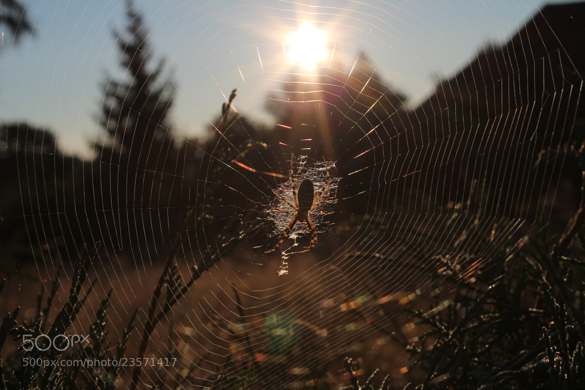 Photograph Little Spider by Benjamin Wolf on 500px