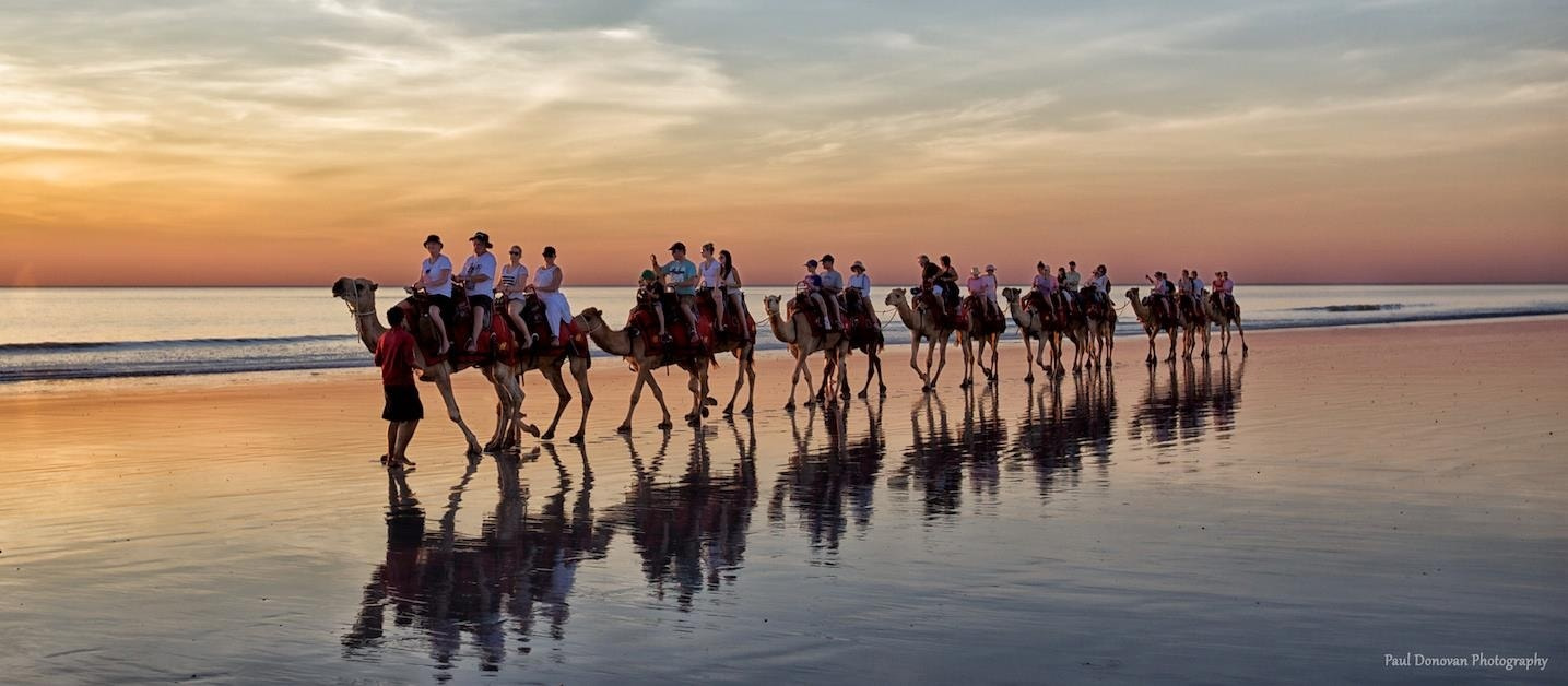 Photograph Camels on Cable Beach by Paul Donovan on 500px
