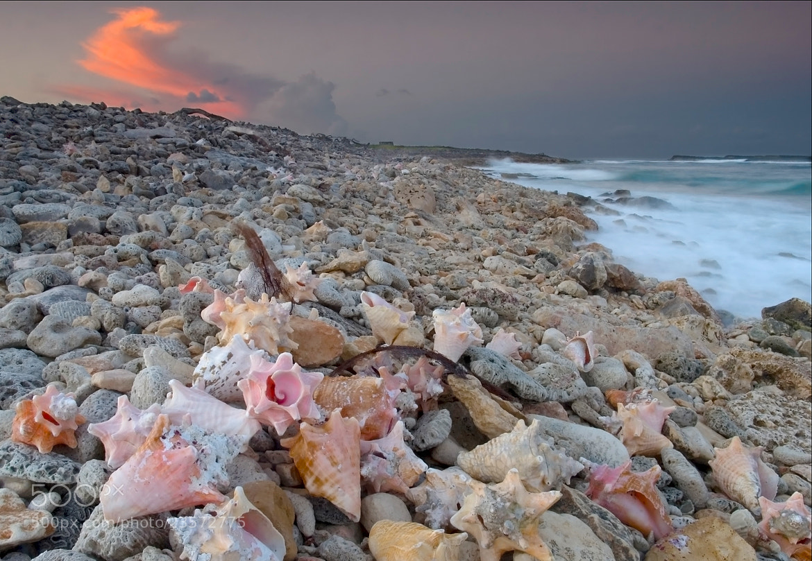 Photograph Shell Beach by Jean-Michel Valade on 500px