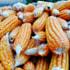 Corn for corn flour