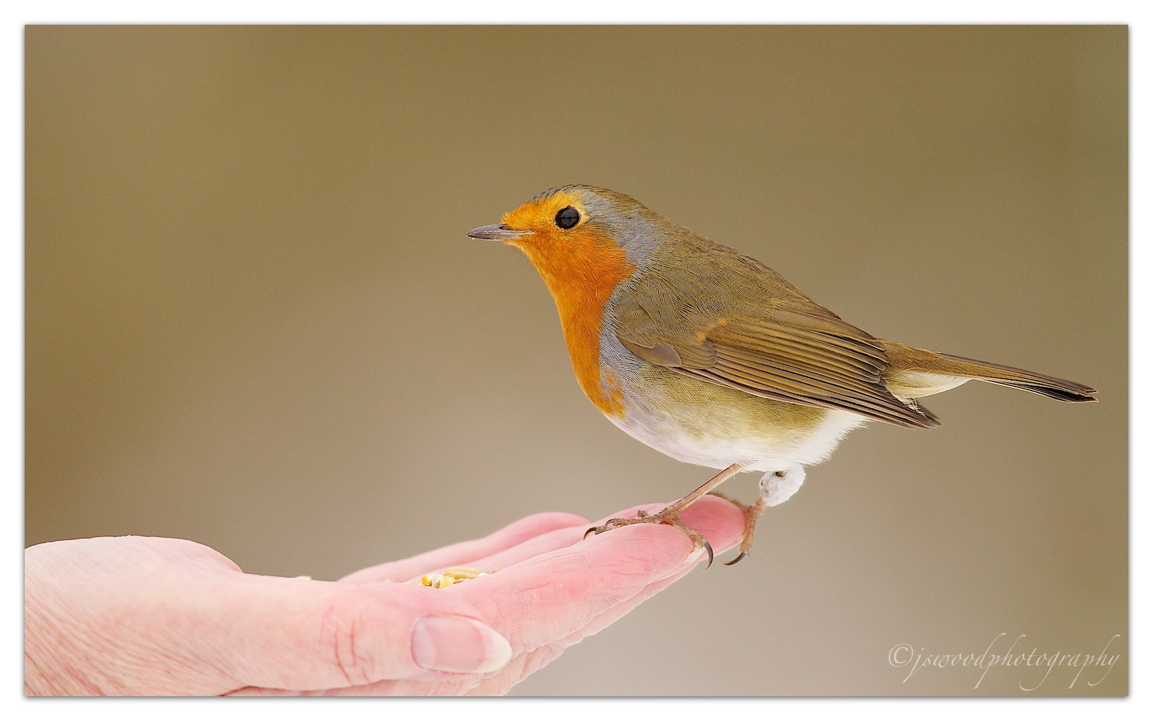 Photograph A Bird in the Hand is worth two in the bush….!! by Jason Wood on 500px