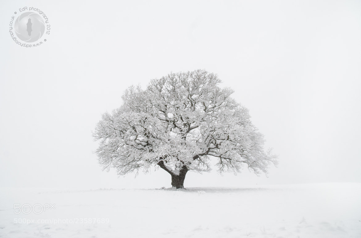Photograph The lonesome tree by Ester de Roij on 500px