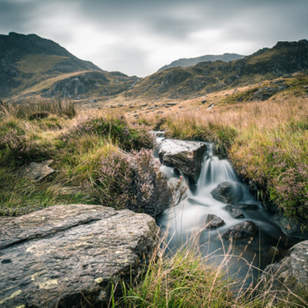 Wild nature of SNOWDONIA!