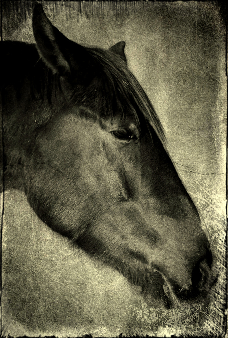 Photograph Horse by Max Fölkel on 500px
