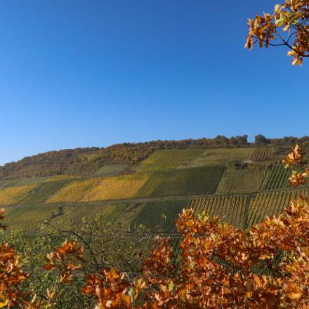 Vineyards at the Rhine