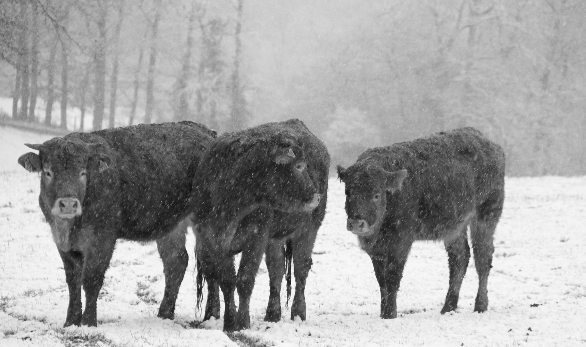 Photograph Hiver en Limousin by Cathy Couty on 500px