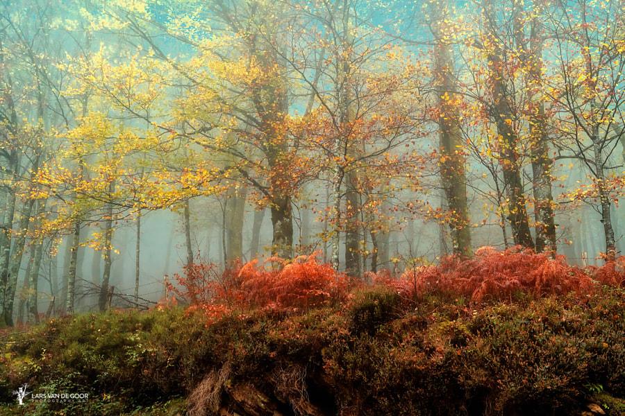 Beeches in the Mist by Lars van de Goor on 500px.com