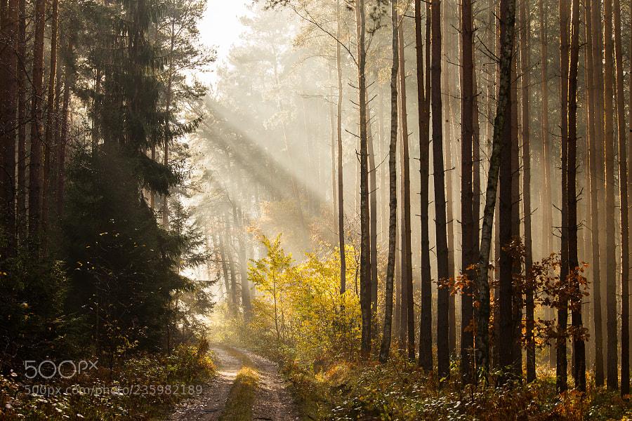 November fog II
