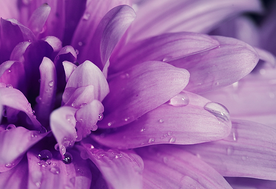 Photograph Fresh and beauty by Diens Silver on 500px