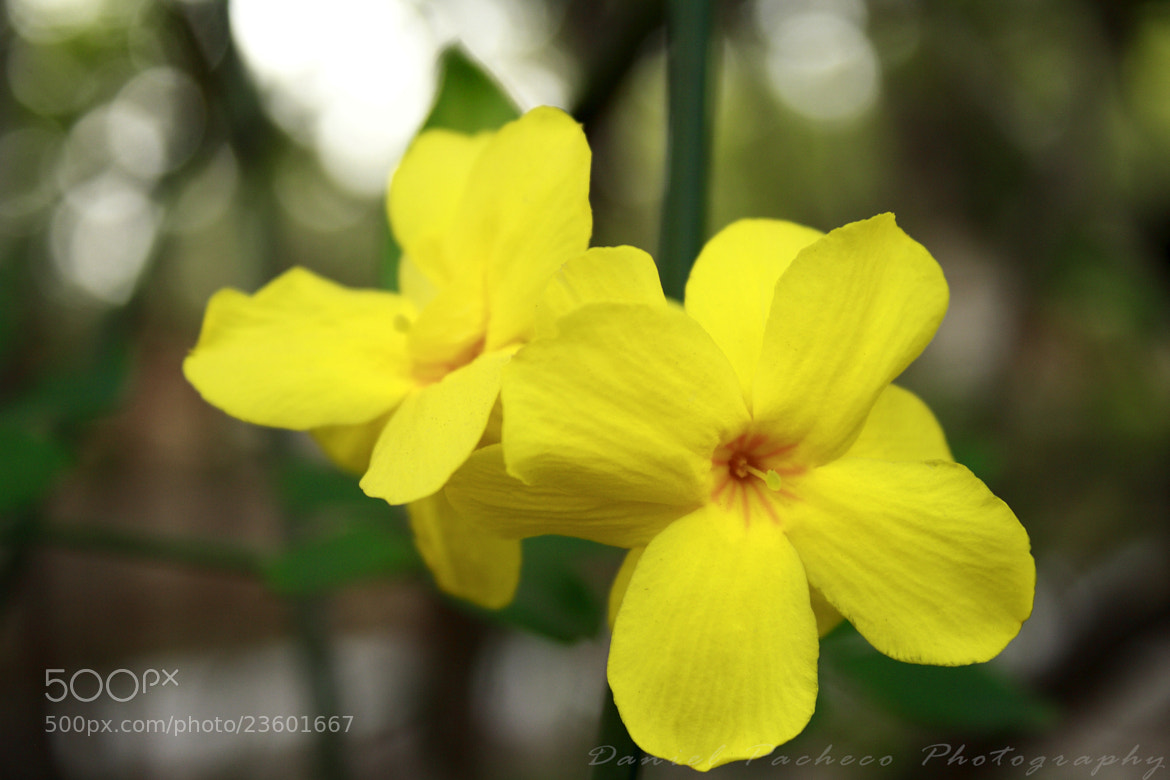 Photograph Yellow by Daniel Pacheco on 500px