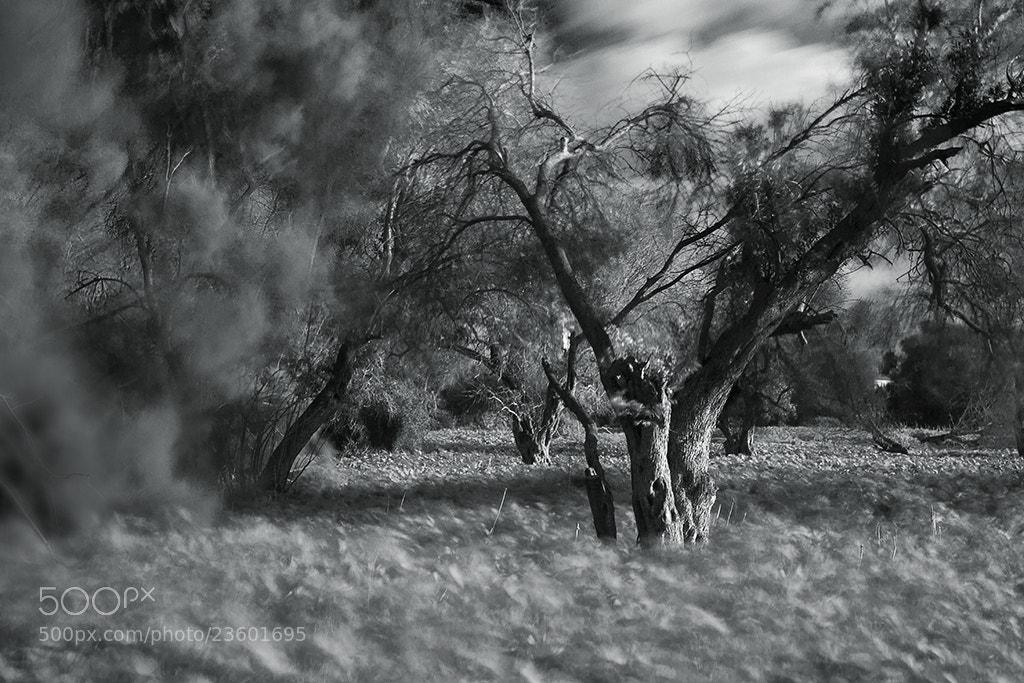 Photograph Storm by Mikhail Plotnik on 500px