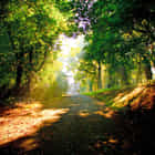 Sunrays of the Trees