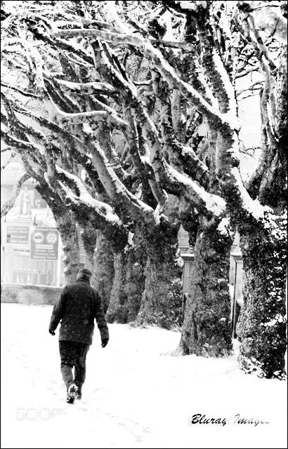 Photograph Snow Stroll! by Raymond Paul on 500px