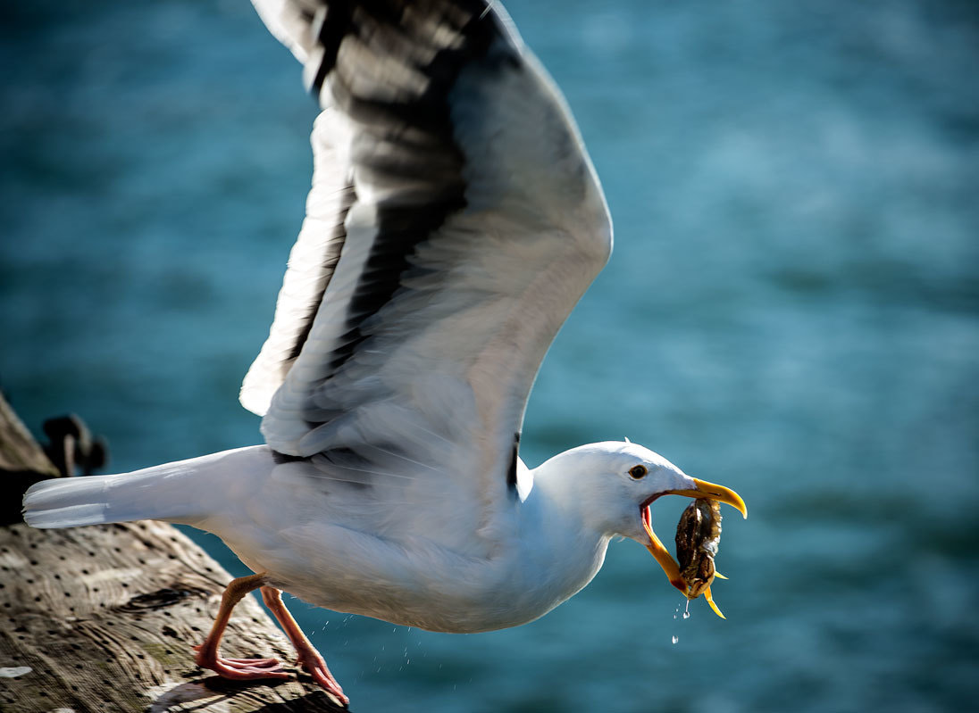 Photograph Happy Seagull by Esten Hurtle on 500px