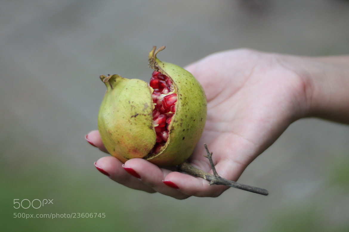 Photograph Romã. (pomegranate fruit) by Isadora Cazella on 500px