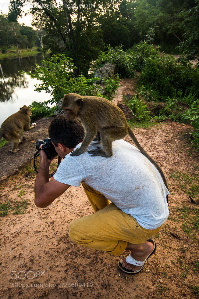 Photograph monkey republic by Alex A. Royal on 500px
