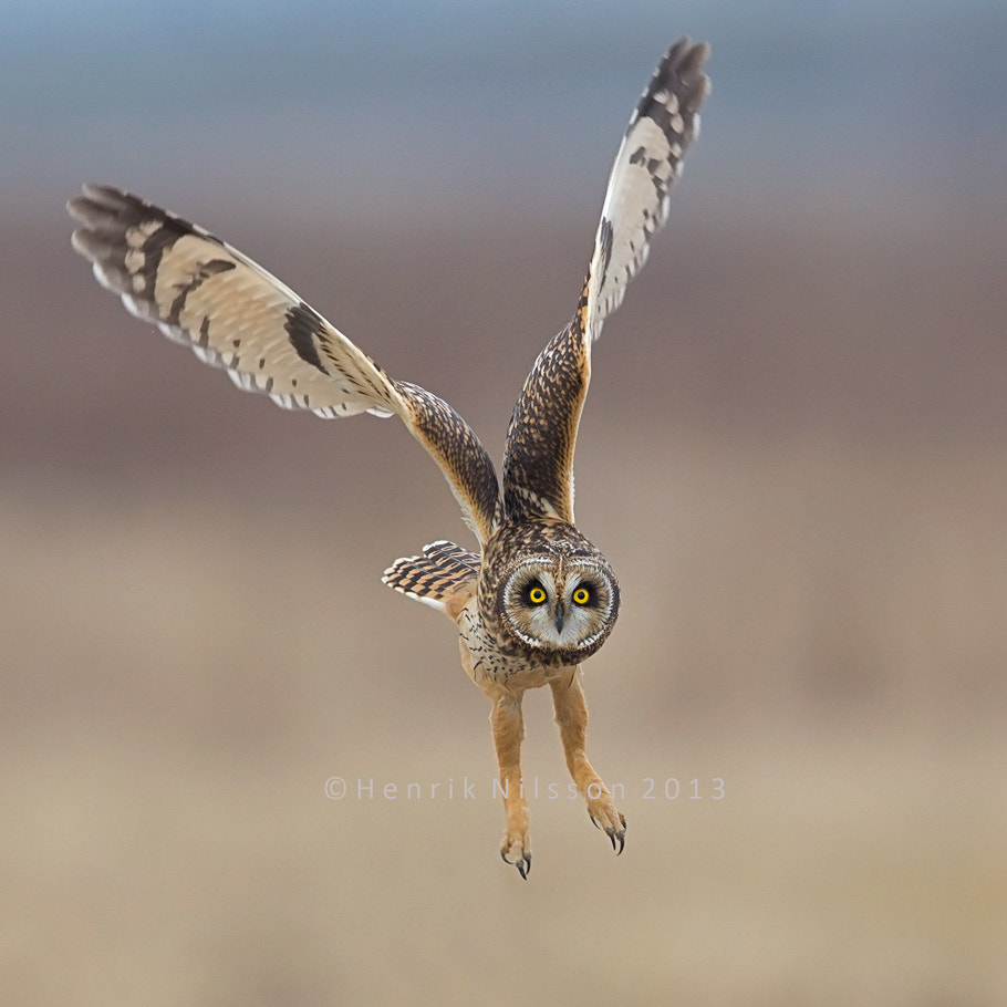 Photograph Up and Away by Henrik Nilsson on 500px