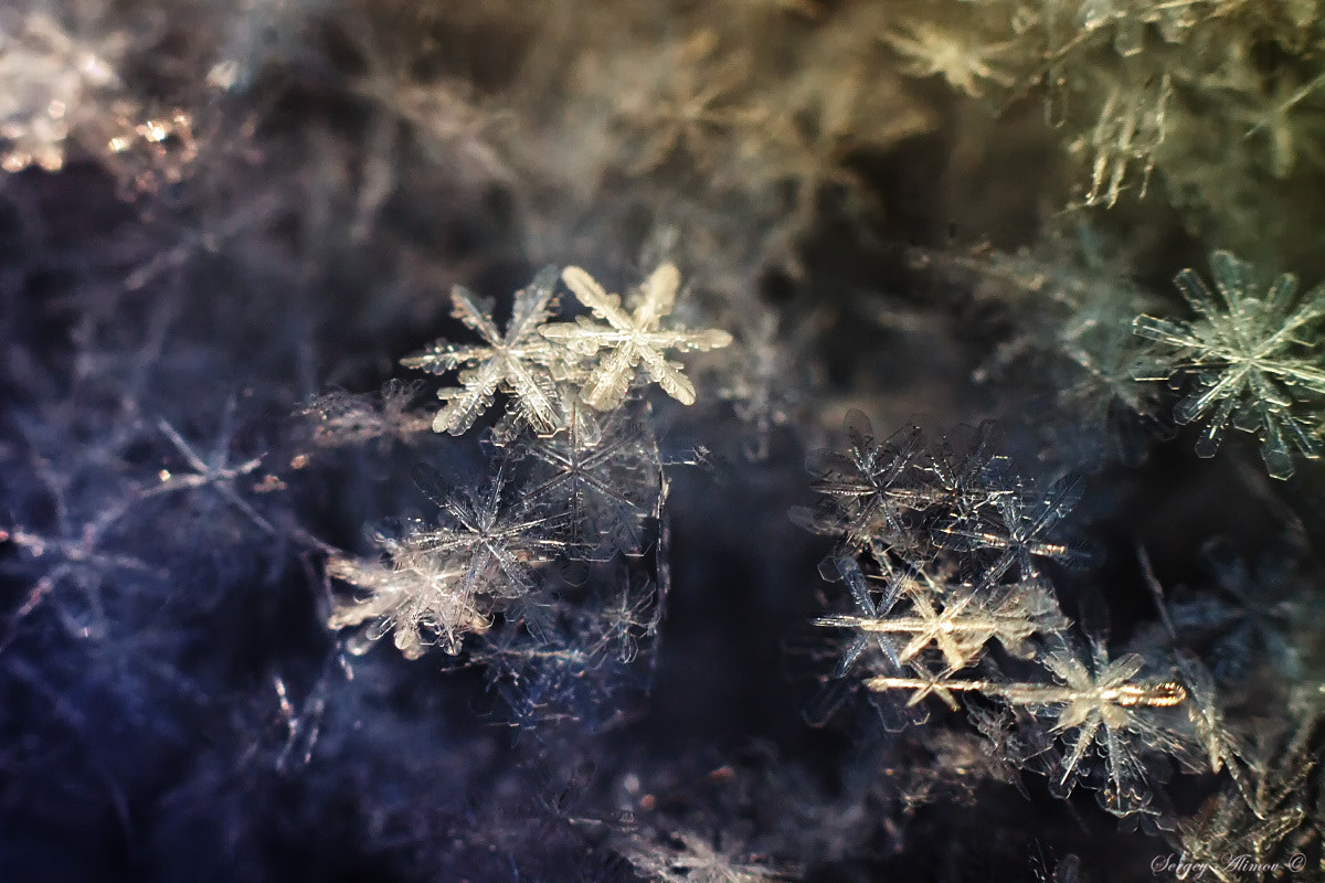 Photograph Crystal Snowflakes by Sergey Alimov on 500px