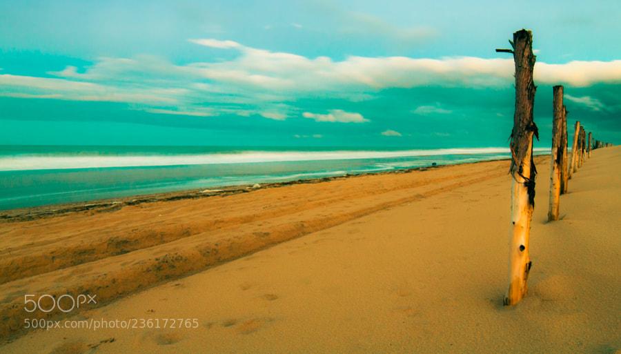 Sticks on the Beach